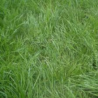 fű zöld
